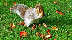 squirrel, wildlife, animal, park, nature