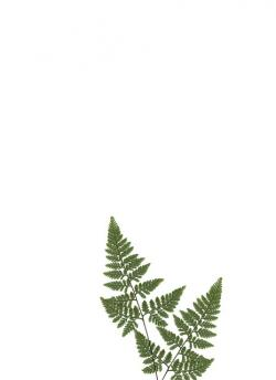 stationery, paper, fern, plant, green, ornament