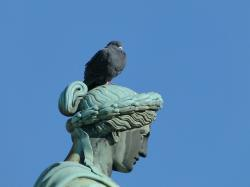 statue, sculpture, art, architecture, bronze, dove