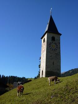 steeple, church, sky, parpan, switzerland, cow, cows