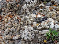 stones, natural stones, large, rock, leaves, yellow