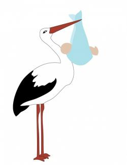 stork, bird, baby, boy, cute, art, illustration, card