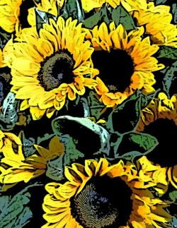 sunflower, sunflowers, bunch, yellow, graphic, artwork