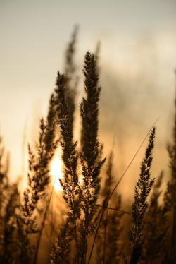 sunset, abstract, abstract background, reeds, plants