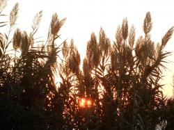 sunset, evening sky, nature, plant, landscape, grass