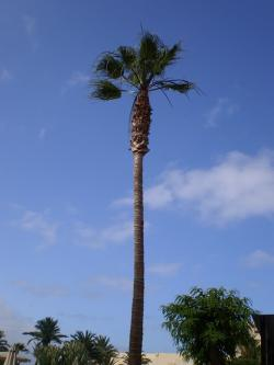 tall, palm tree, holiday