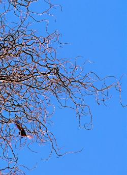 the departure of the, branch, twisted willow, sky, blue