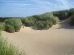 the netherlands, marram grass, plants, sky, clouds