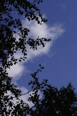 the sky, in the cloud, blue, silhouette, bright