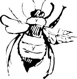 top, view, drawing, bee, stripes, wings, art, insect