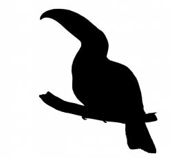 toucan, bird, art, black, silhouette, clipart