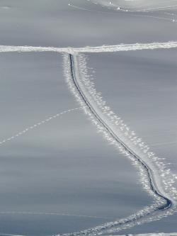 trace, trail, cross country skiing, ski tour, away