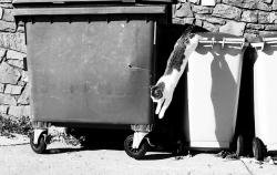 trash, cat, wastes, black and white, container