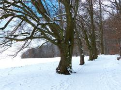 tree, avenue, snow, snowy, winter, cold, field, away