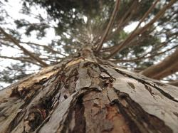 tree, bark, wood, brown, aesthetic, strong, plant