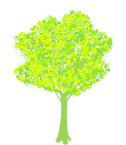 tree, branches, greenery, leaves, spring