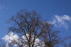 tree, clouds, sky, blue, silhouette, bruise, april