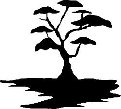 tree, exotic, landscape, soil, growing, bonsai, black