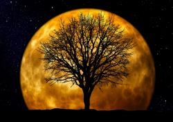 tree, kahl, moon, background, night, evening