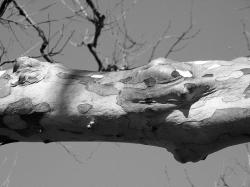 tree, limb, branch, texture, animal, skin, snakeskin