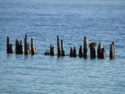 tree stumps, water, lake, blue, sunshine