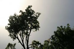 tree, tall, green, sky, grey, glow, sun, light