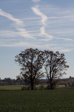 trees, arable, field, cultivation, hair dryer, contrail