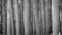 trees, forest, wood, together