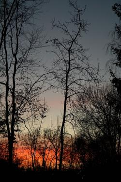 trees, tree trunks, sunset, afterglow, evening sky