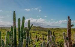 venezuela, mountains, sky, clouds, landscape, cactus