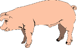 view, barn, farm, pink, pig, side, animal, mud, slop