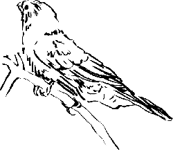 view, drawing, bird, branch, side, animal, feathers