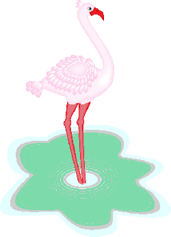 water, bird, wings, flamingo, animal, feathered