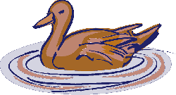water, brown, pink, bird, duck, style, swimming, wings