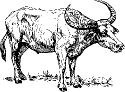 water, cartoon, cow, bull, buffalo, moose, horns