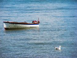 water, lake erie, boat, lake, seagull, bird, gull