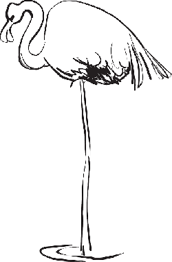 water, outline, bird, art, flamingo, standing, feathers