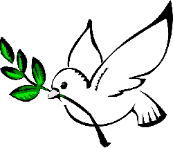 white dove, olive branch, pigeon, freedom, flying