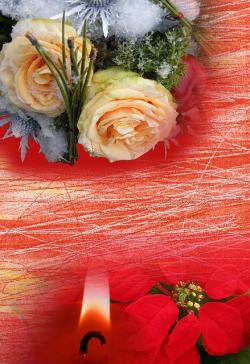 winter flowers, christmas, background, greeting, gifts
