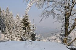 winter, snow, top, tree, landscape, view