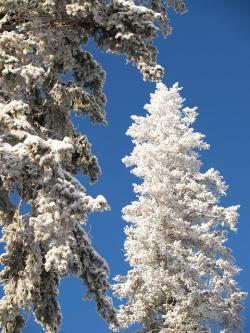 winter, trees, snow, ice, cold, sunny, frozen, nature