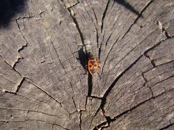 wood, beetle, insects, bug