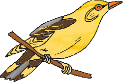 yellow, bird, branch, wings, animal, beak, finch