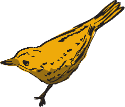 yellow, drawing, bird, wings, animal, curious, feathers