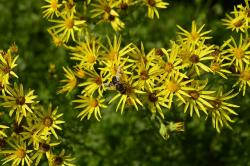 yellow, flowers, bee, yellow flower