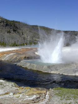 yellowstone national park, wyoming, usa, geyser